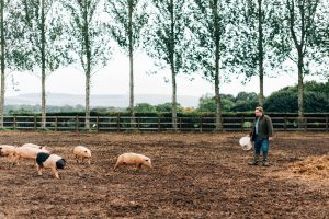 Irish Pig Farm