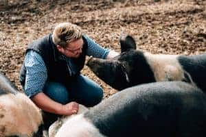 Alastair and his free range saddle back pigs